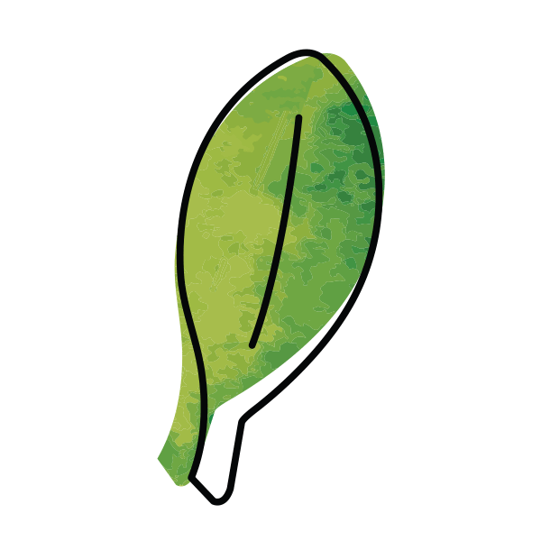 illustrated icon of green spinach leaf